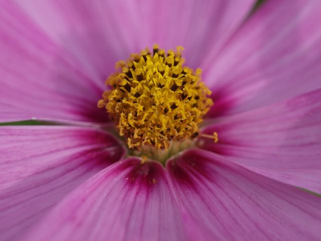 Macro photo de fleurs P7160510