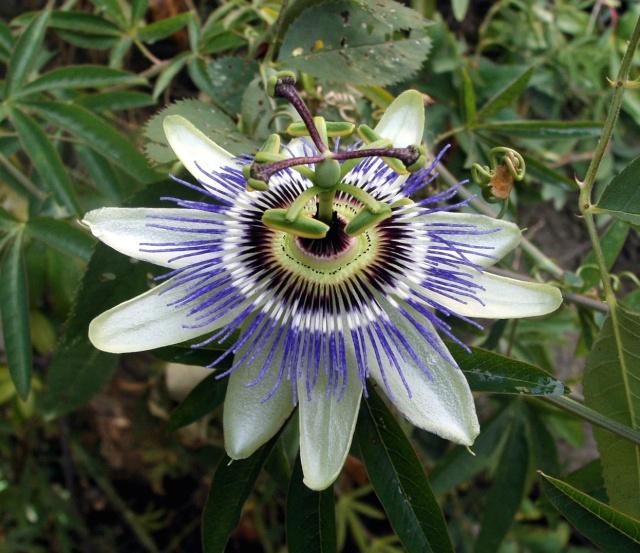 Fleurs de maëlie Photo105