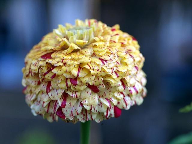 Macro photo de fleurs Photo_64