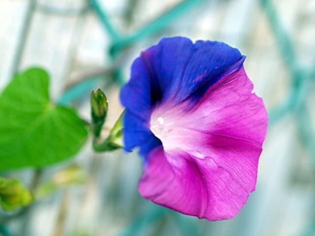 Macro photo de fleurs Photo_66