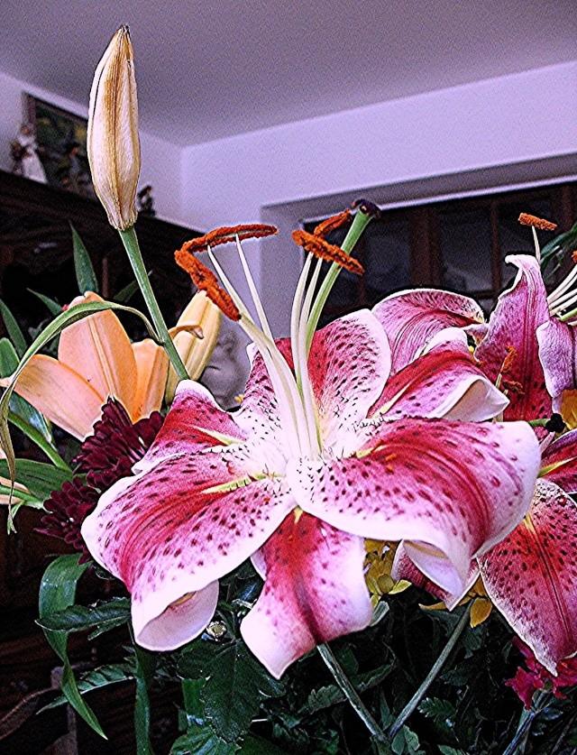 Fleurs de maëlie Photo_92