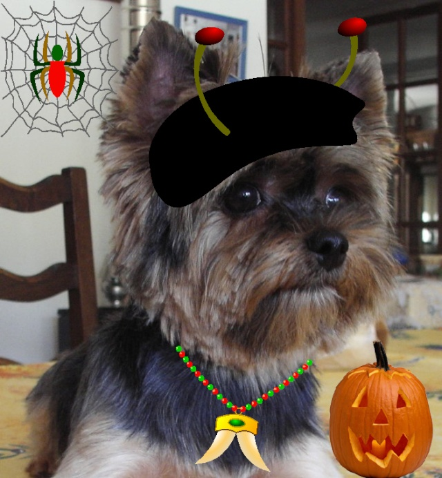 Montages pour HALLOWEEN Ppp_bb10