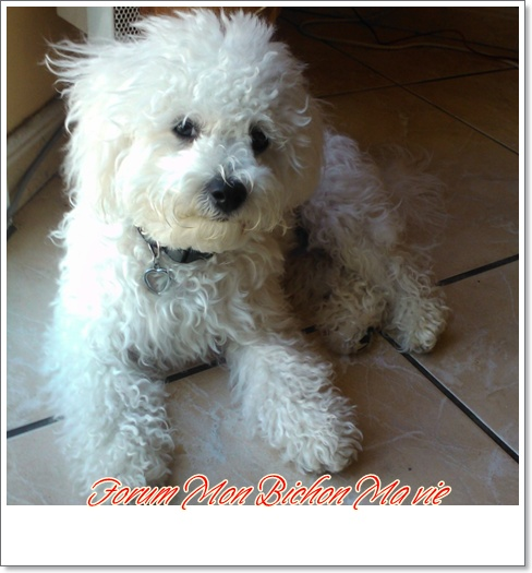 Album photos des bichons Bibigr10