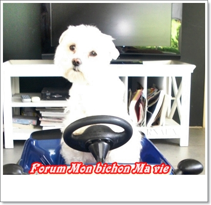 Album photos des bichons Eros10