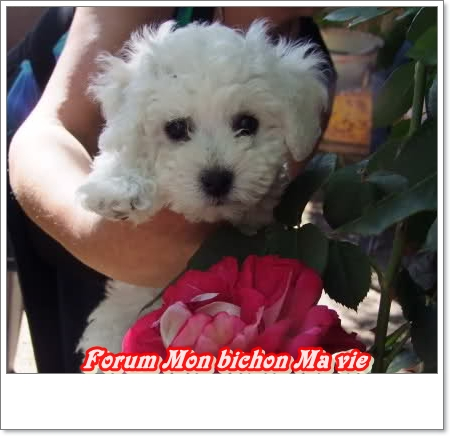 Album photos des bichons Galaxi10