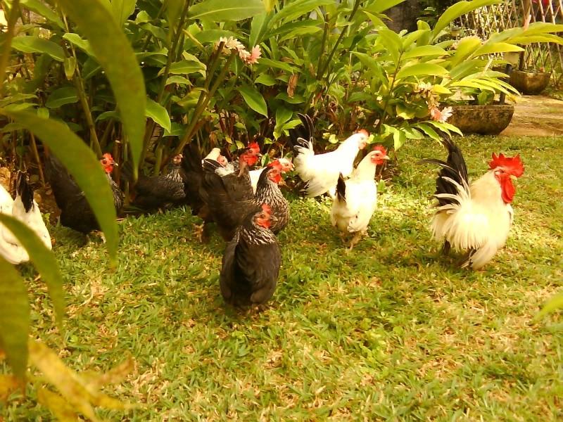 L'élevage de BANA Dsc05316