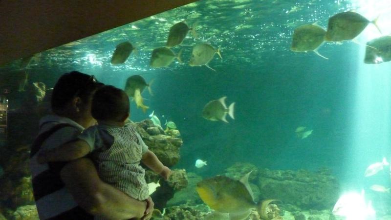 aquarium 7eme continent P1010711