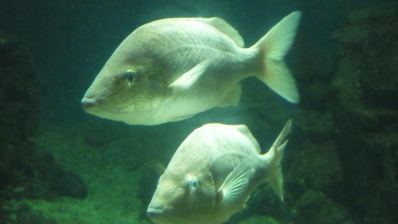 aquarium 7eme continent P1010712