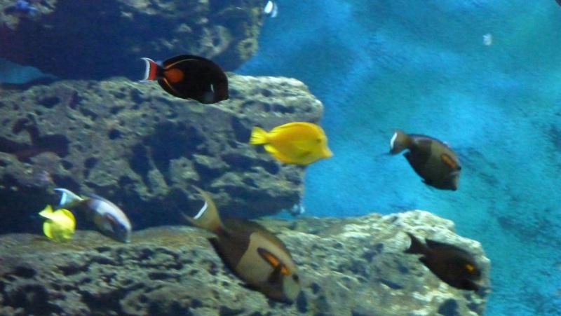 aquarium 7eme continent P1010713