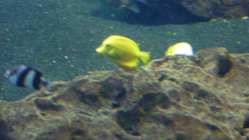 aquarium 7eme continent P1010714