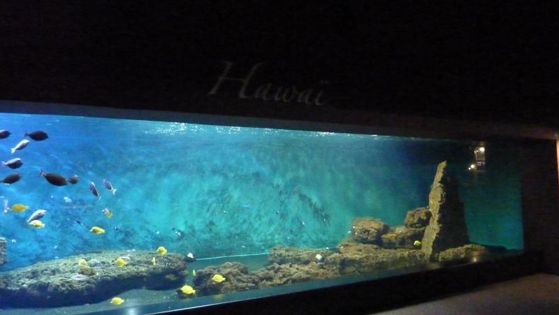 aquarium 7eme continent P1010715