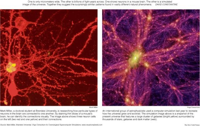 Artículo del diario New York Times sobre similitud entre las neuronas y el universo Simila13