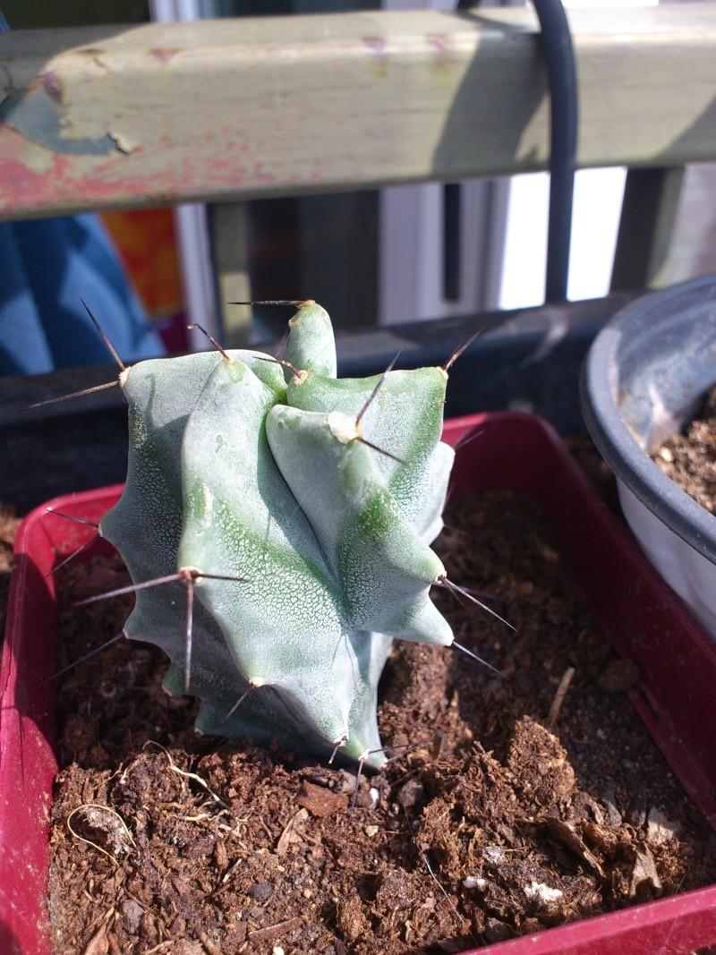 succulentes a identifier.. Dsc_0015