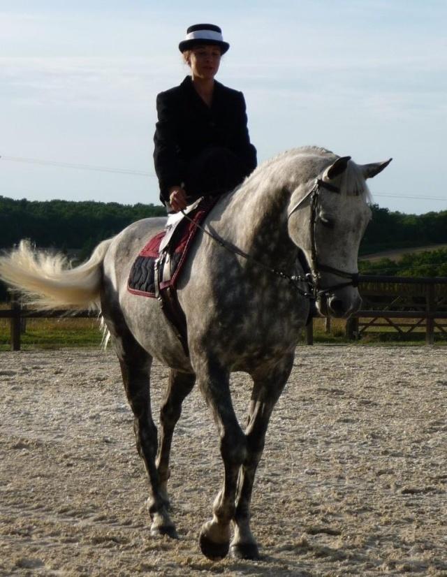 Une cavalière pratiquant, entre autres, l'équitation en amazone 29018610