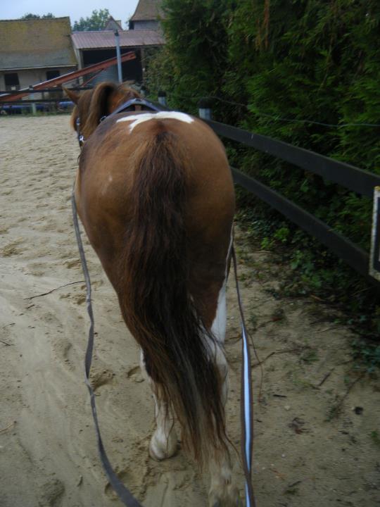 Une cavalière pratiquant, entre autres, l'équitation en amazone Longue10