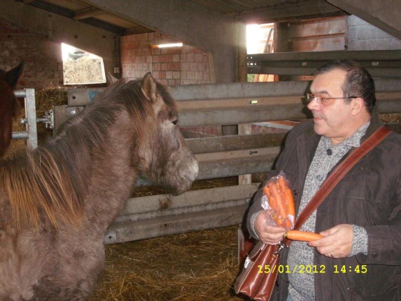 ASTER, poulain (croisé haflinger et poney d'1m40), adopté 39728210