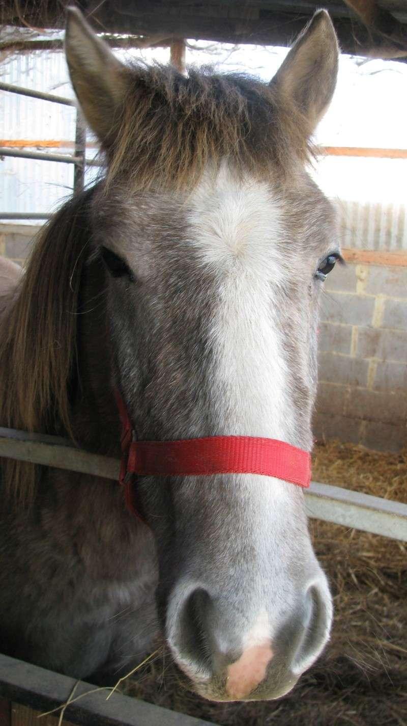 ASTER, poulain (croisé haflinger et poney d'1m40), adopté Img_6010