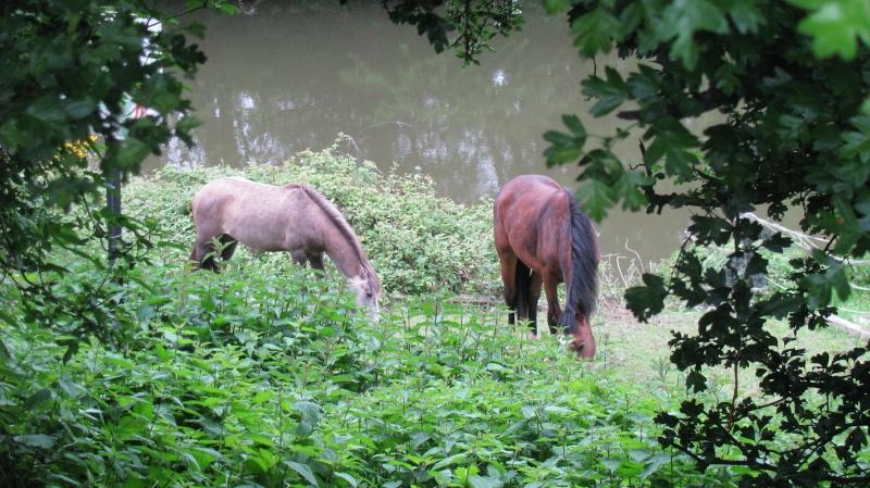 ASTER, poulain (croisé haflinger et poney d'1m40), adopté Img_6711