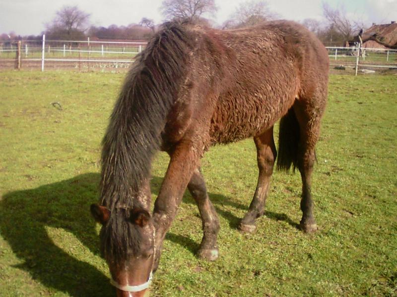 Nestor, hongre de deux ans, croisé quart trait et SBS (Adopté) Sunp0010