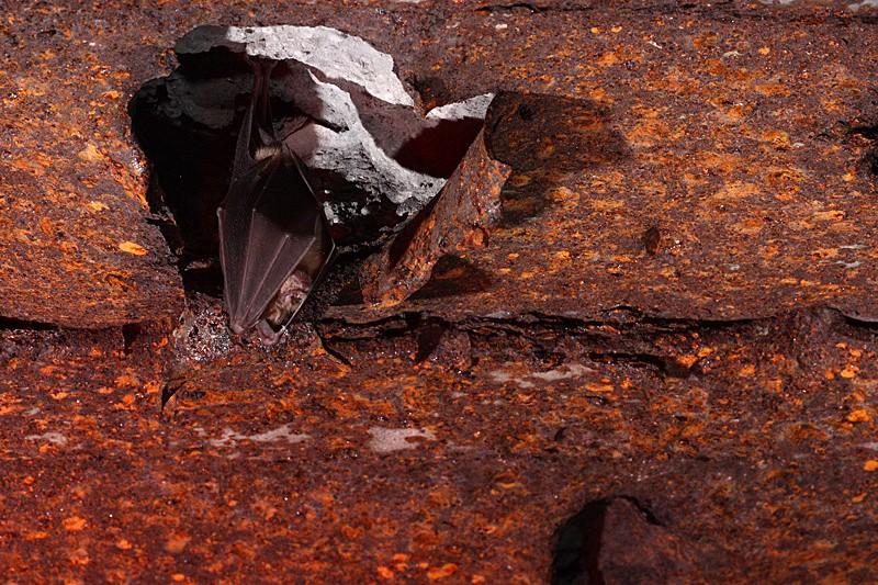 Chauves-souris dans les bunkers _mg_7713