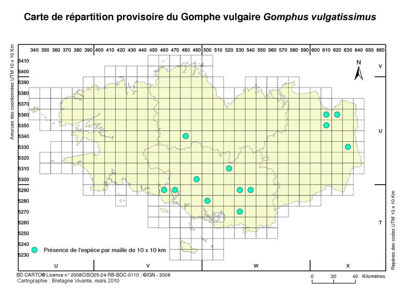 Gomphus vulgatissimus  Gomphe10