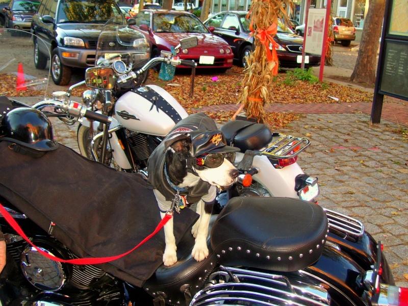 Past Encounters Harley10