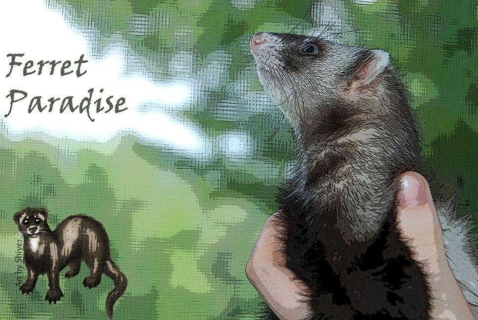 Ferret Paradise