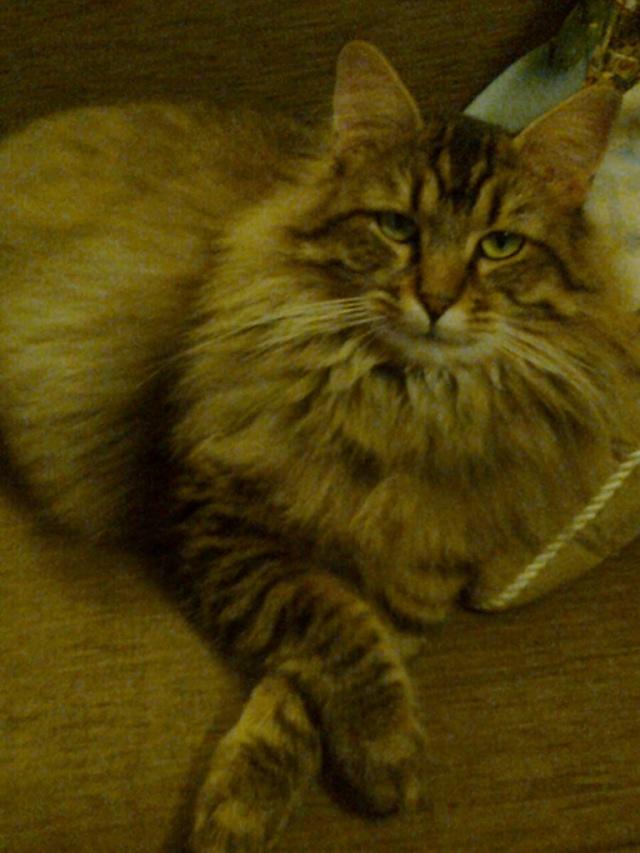 JAZZ rebaptisé JASON mâle à poils longs de 2 ans  - Page 5 Photo014