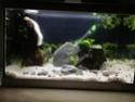 Nano 44 litres et 30 litres spé crevettes cbs et blue dream...questions! 18_l10