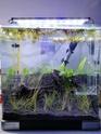 Nano 44 litres et 30 litres spé crevettes cbs et blue dream...questions! 27_l10