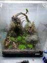 Nano 44 litres et 30 litres spé crevettes cbs et blue dream...questions! 30_l10