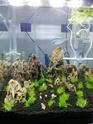 Nano 44 litres et 30 litres spé crevettes cbs et blue dream...questions! 44_l10