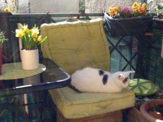 la vie des chats ... Img_5314