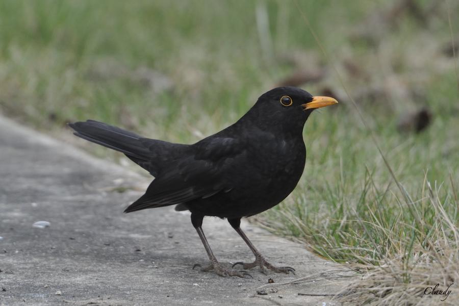 Photos oiseaux hiver 2012 - Nikon 1 V1  (MAJ 14/04) 12031010