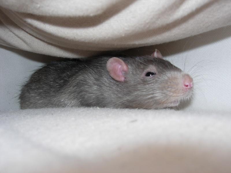 Mon rat ne bouge plus  Dscn4612