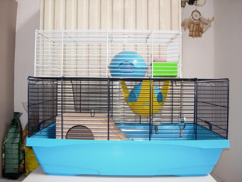 Mon rat ne bouge plus  Dscn4613