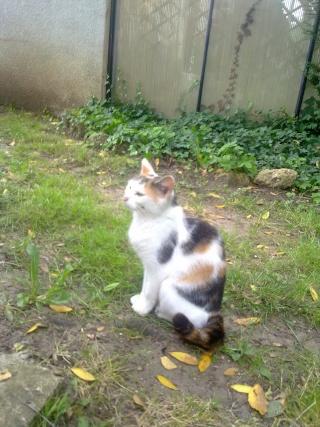 YOUKA - Adulte agée - Femelle tricolore blanc + queue mi-courte 05072034