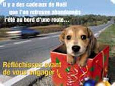 Il y a des cadeaux de Noël que l'on retrouve abandonnés l'été au bord d'une route... (Fondation 30 millions d'amis) Des_ca10