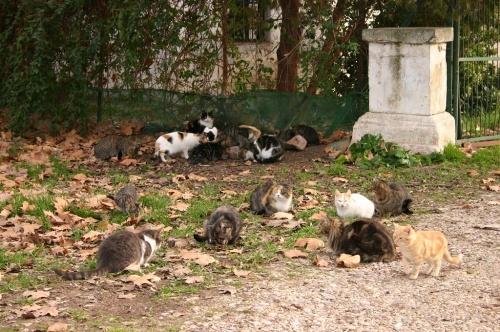 En hommage aux chats errants (sur le site chats-errants.com) Errant10