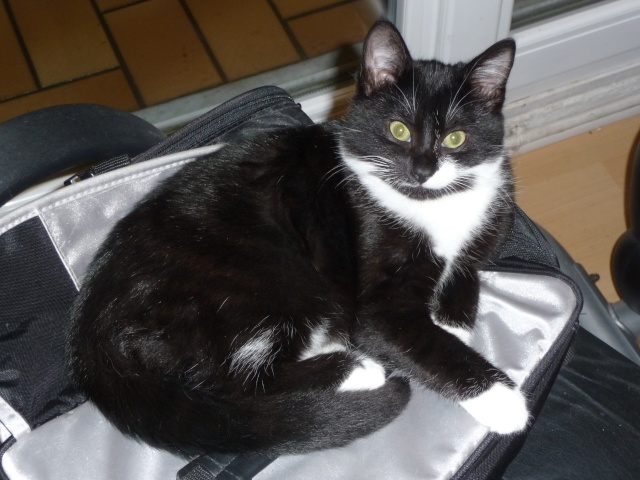 GHINI - 10 mois - Mâle noir & blanc Ghini10