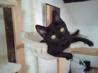 ALKALINE - 3 mois - Femelle noire Photo_48