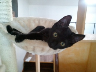 ALKALINE - 3 mois - Femelle noire Photo_49