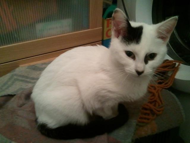 IBIZA - 6 mois - Femelle blanche & tâches noires Photo_71