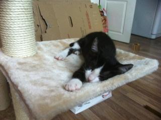 PAM - 3 mois - Femelle noire et blanche V_01ad10