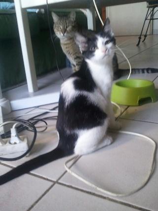 DJINN - 5 mois - Femelle noire et blanche Wp_00025