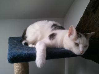 MELODIE - 2 ans - Femelle blanche et marbrée marron Wp_00054
