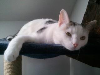 MELODIE - 2 ans - Femelle blanche et marbrée marron Wp_00055