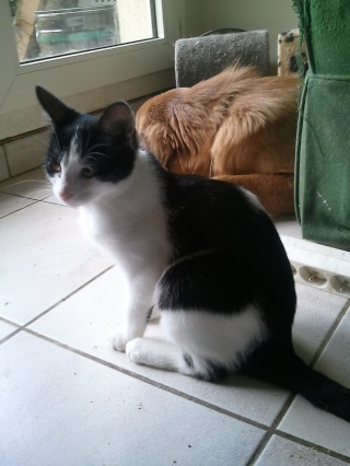 DJINN - 5 mois - Femelle noire et blanche Wp_00059