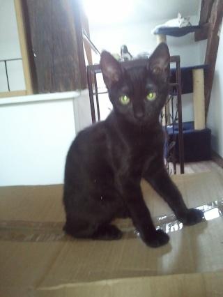 ALKALINE - 3 mois - Femelle noire Wp_00072