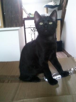 ALKALINE - 3 mois - Femelle noire Wp_00073